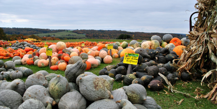 2) Take the time to pick your own pumpkin at a local patch