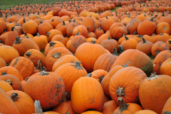 6) While you're at it, you can pick up your pumpkin at a pumpkin patch