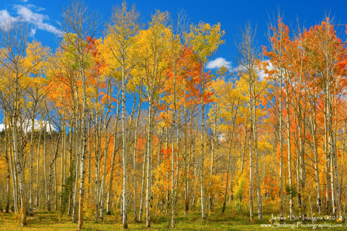 5. Colorado may as well be the poster child for an ideal fall day.