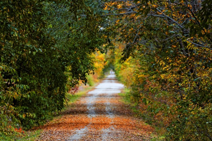 5. Step out to enjoy the lovely foliage.