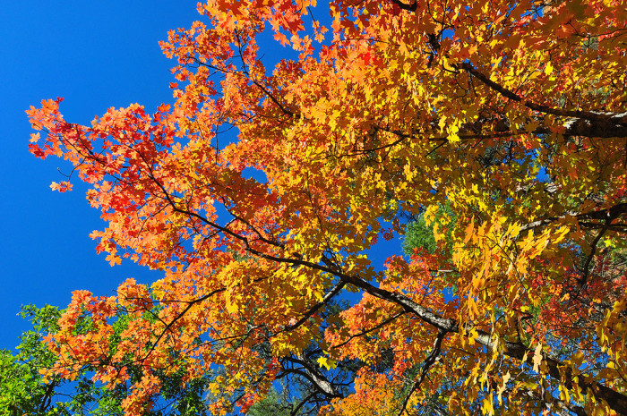 1. Fall means our forests turn into a technicolor dreamscape.