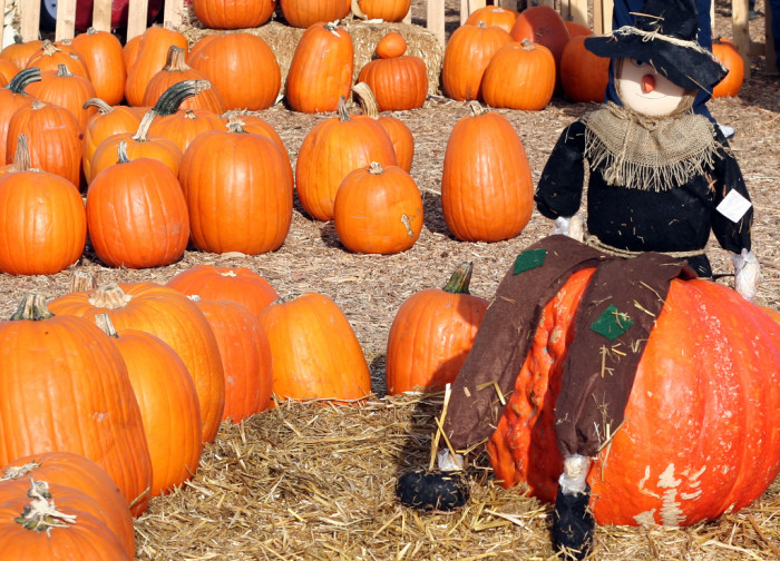 6. ...and pumpkin patch visits.