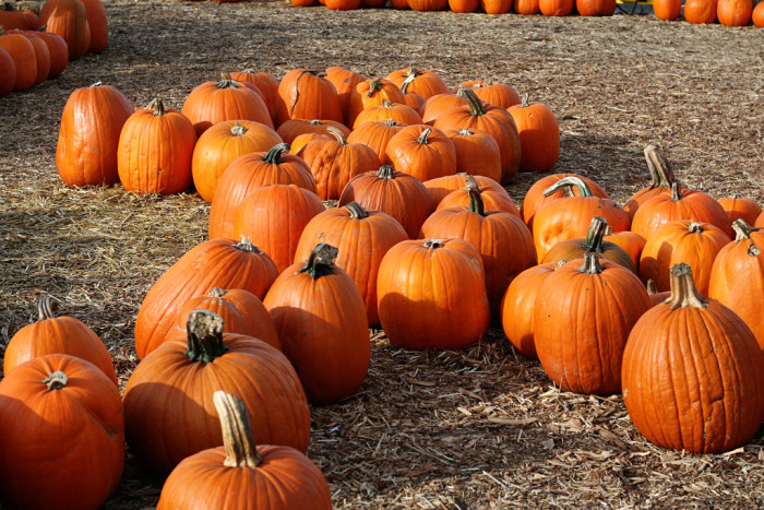 4. Pumpkin patches start popping up across the state.