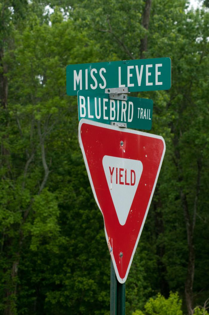 7. Miss Levee, Tunica