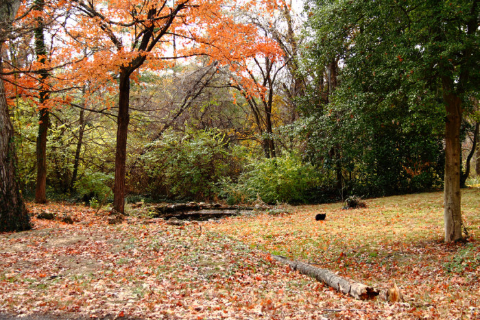 16. This picture was snapped in New Albany. Something about this picture makes me think of autumns in my past.