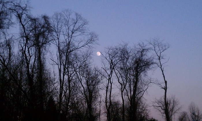 8) Take a Moonlit Hike, Covington, LA