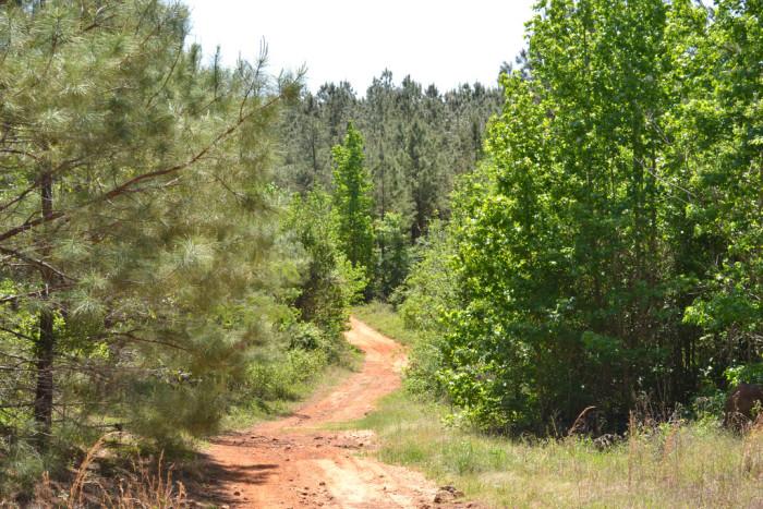 14) Hiking through the pineywoods of East Texas, anyone?