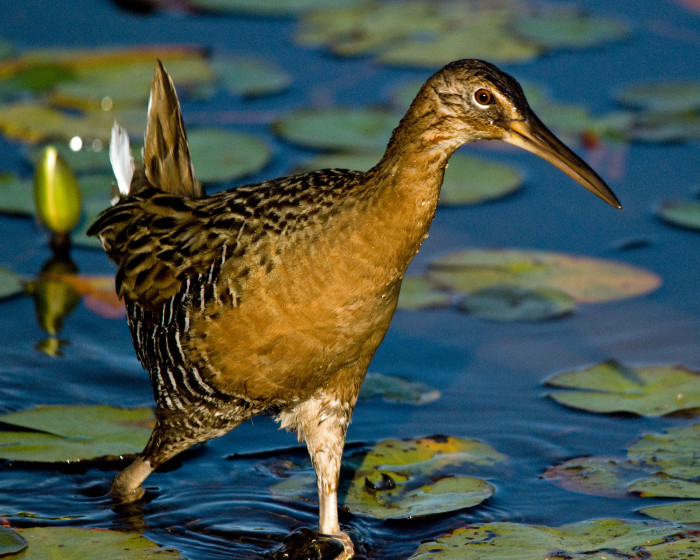2) Big Branch Marsh National Wildlife Refuge, Lacombe