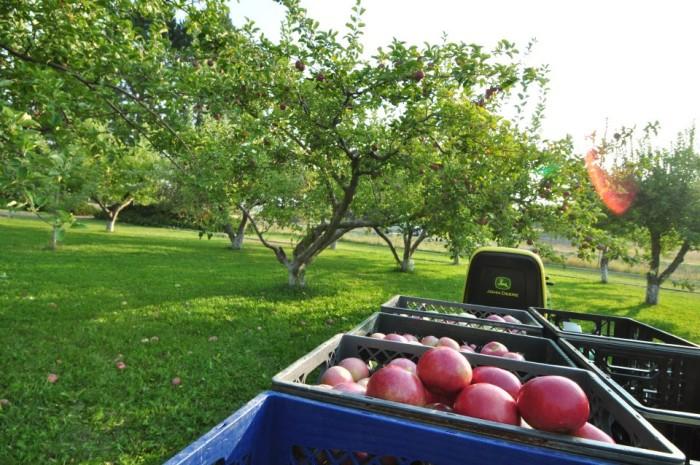 10) Apple Picking