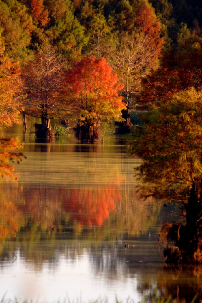 5. Autumn's presence is perfectly catpured in this serene shot of Bluff Lake.