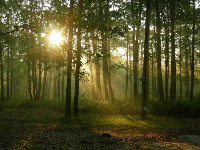 5. Wharton State Forest, Hammonton