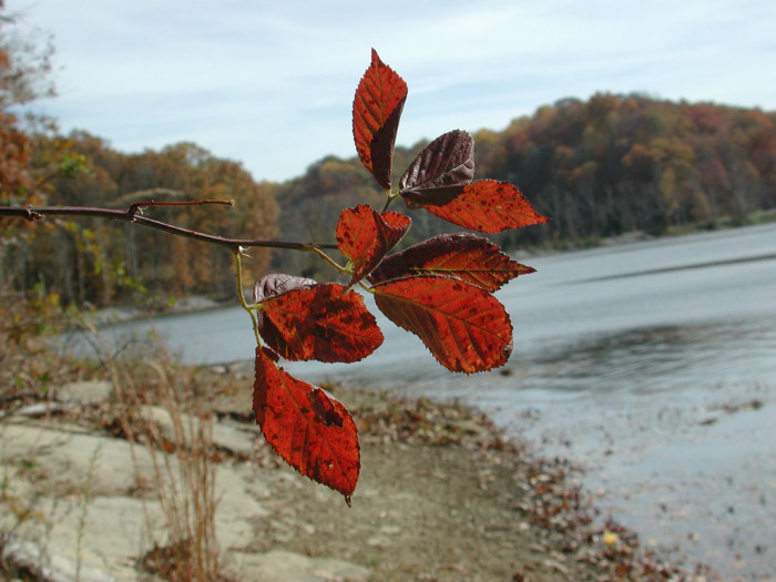 6. This is Lake Griffy. I picked this picture because the leaves that change vibrant red are my favorite part of the fall season.