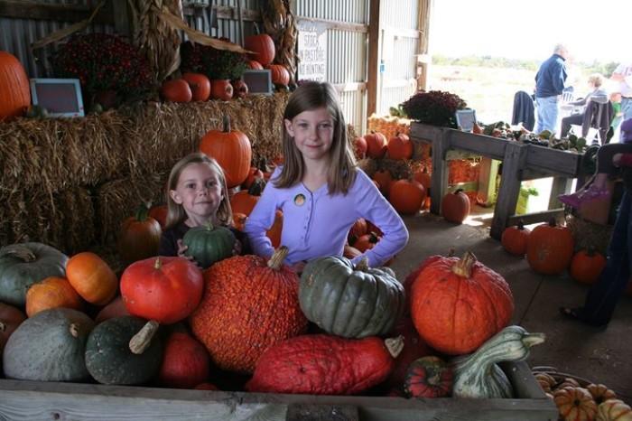 5. The Pumpkin Ranch