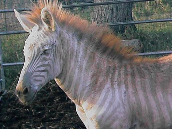 6) Three Ring Ranch Exotic Animal Sanctuary, Big Island