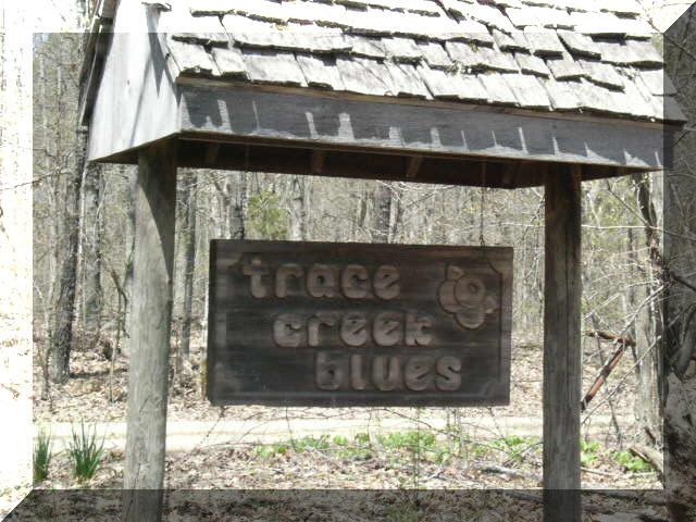6. Trace Creek Blues, Cr 828 Route 1 Box 1685, Glenallen