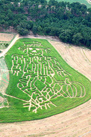6. Get lost in a corn maze.