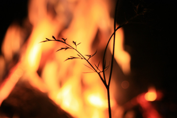 3) Nothing beats the smell of burning leaves