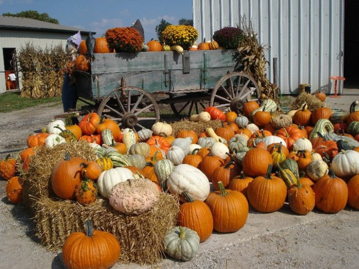 6. Schaake's Pumpkin Patch (Lawrence)