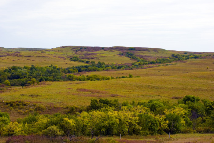 7. The Flint Hills are beginning to look like this: