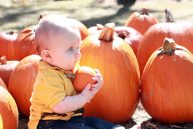 3. Pumpkin patches