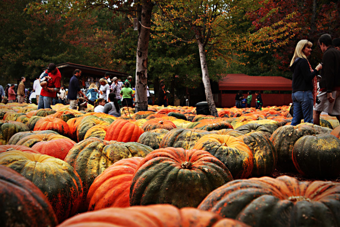 5. The Pumpkin Patch