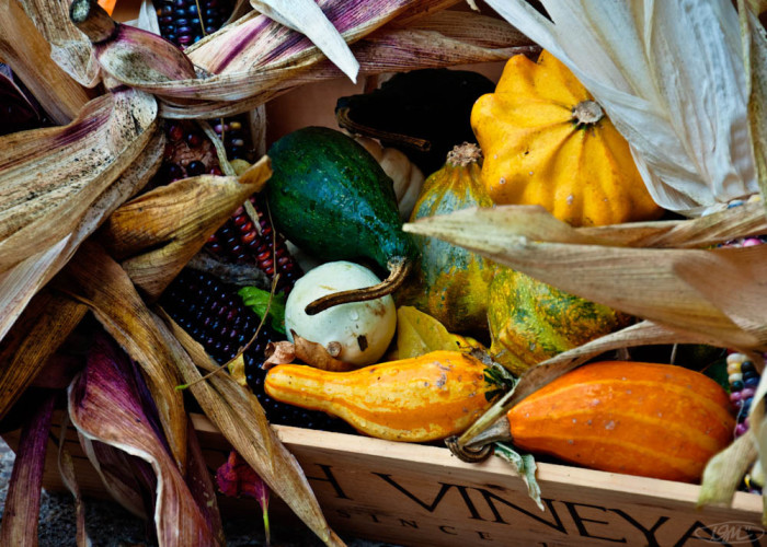 4) Fall Harvest