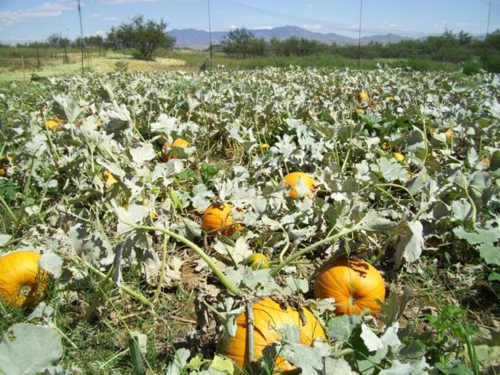 5. Harris Heritage Growers, Sonoita