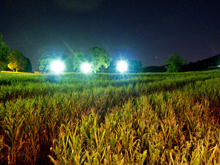 7. And I can't forget the corn mazes...