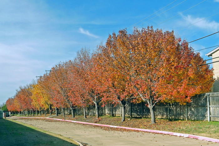 3) The leaves are turning subtle shades of red, yellow, and orange. In a few weeks, it will REALLY look like fall in Texas!