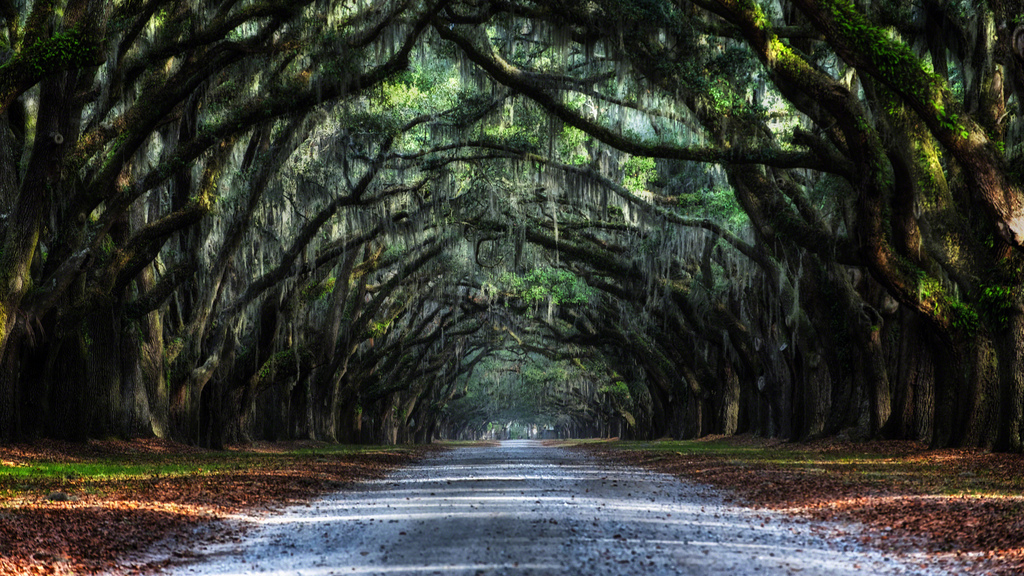 The Best Country Roads in Georgia to Drive in the Fall |Georgia Country Roads
