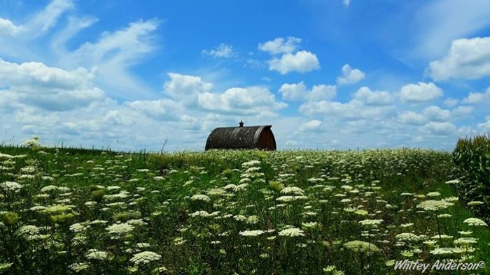 15. Any field of wildflowers on a bright summer day