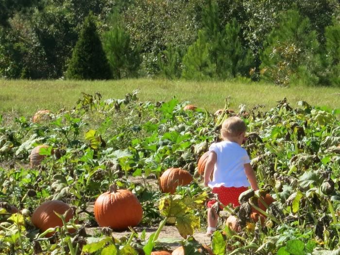 7. Find the perfect pumpkin.