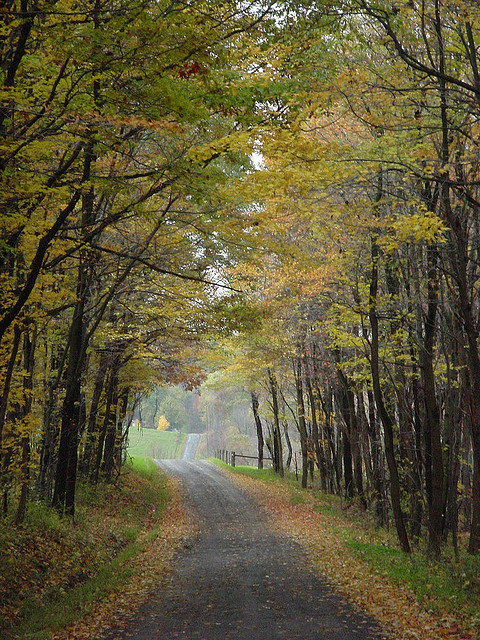 5. This charming gravel road winds through McConnell's Mill State Park in Lawrence County.