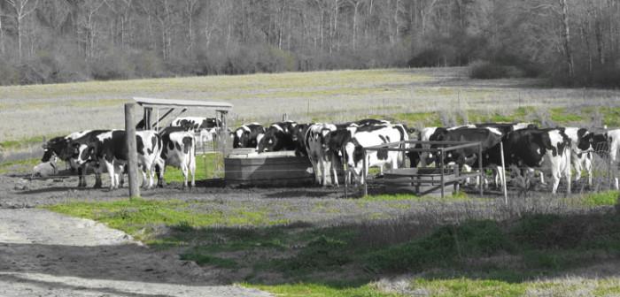 7. Ard's Dairy Farm, Ruth