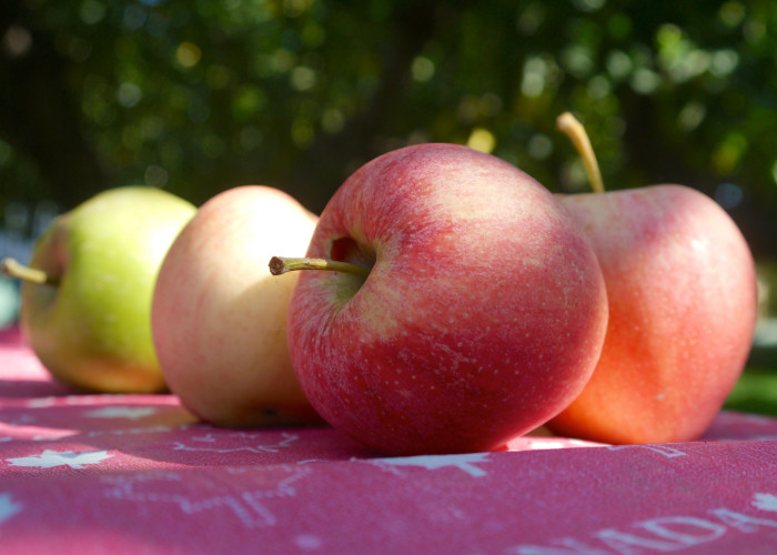 14. Pick a u-pick farm and pick some fruits. It's great to get out and do things together that bring you together.