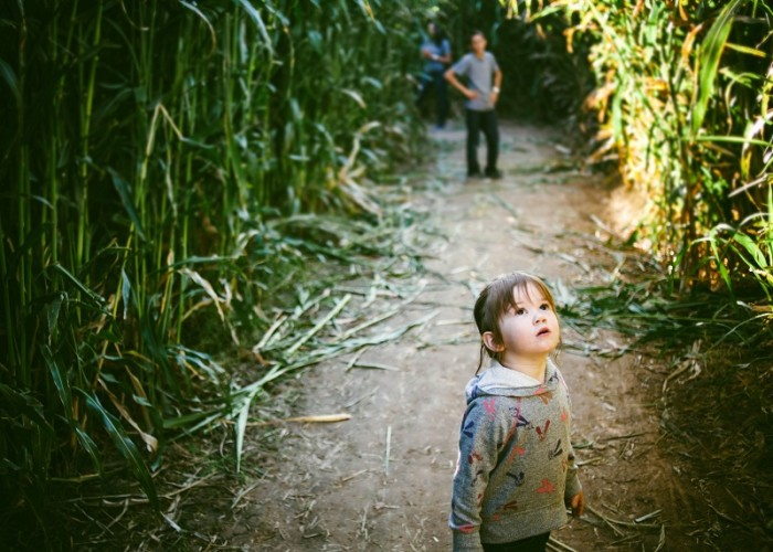 7. You've been lost in a corn field, whether intentionally during a corn maze, or unintentionally during detasseling.