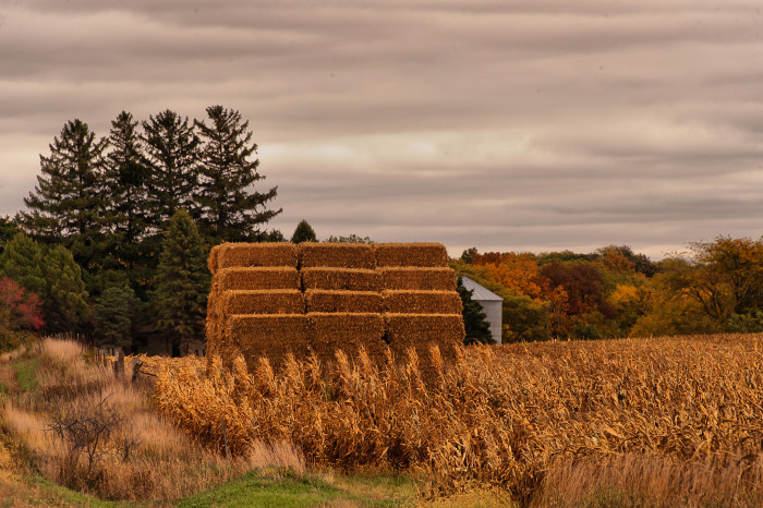 7. You notice that the fields have suddenly turned gold, and there are even farmers out harvesting already.