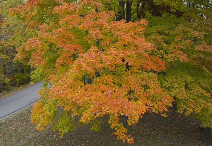 800px-Vista_desde_la_torre_de_observación,_Parque_Estatal_Brown_County,_Indiana,_Estados_Unidos,_2012-10-14,_DD_09