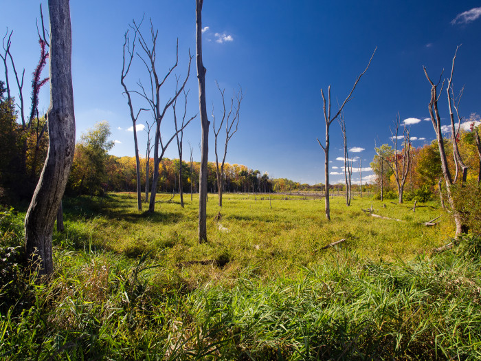 2. This is a picture of wetland after a drought in Merry Lea Environmental Center.