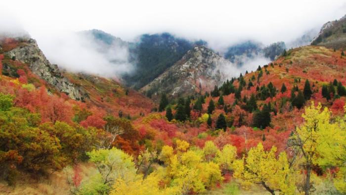 1) Beautiful Autumn Leaves