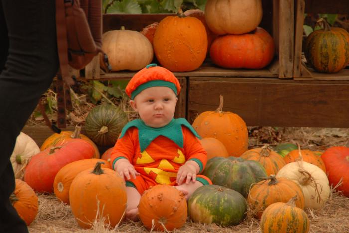 8. Take a trip to a pumpkin patch.