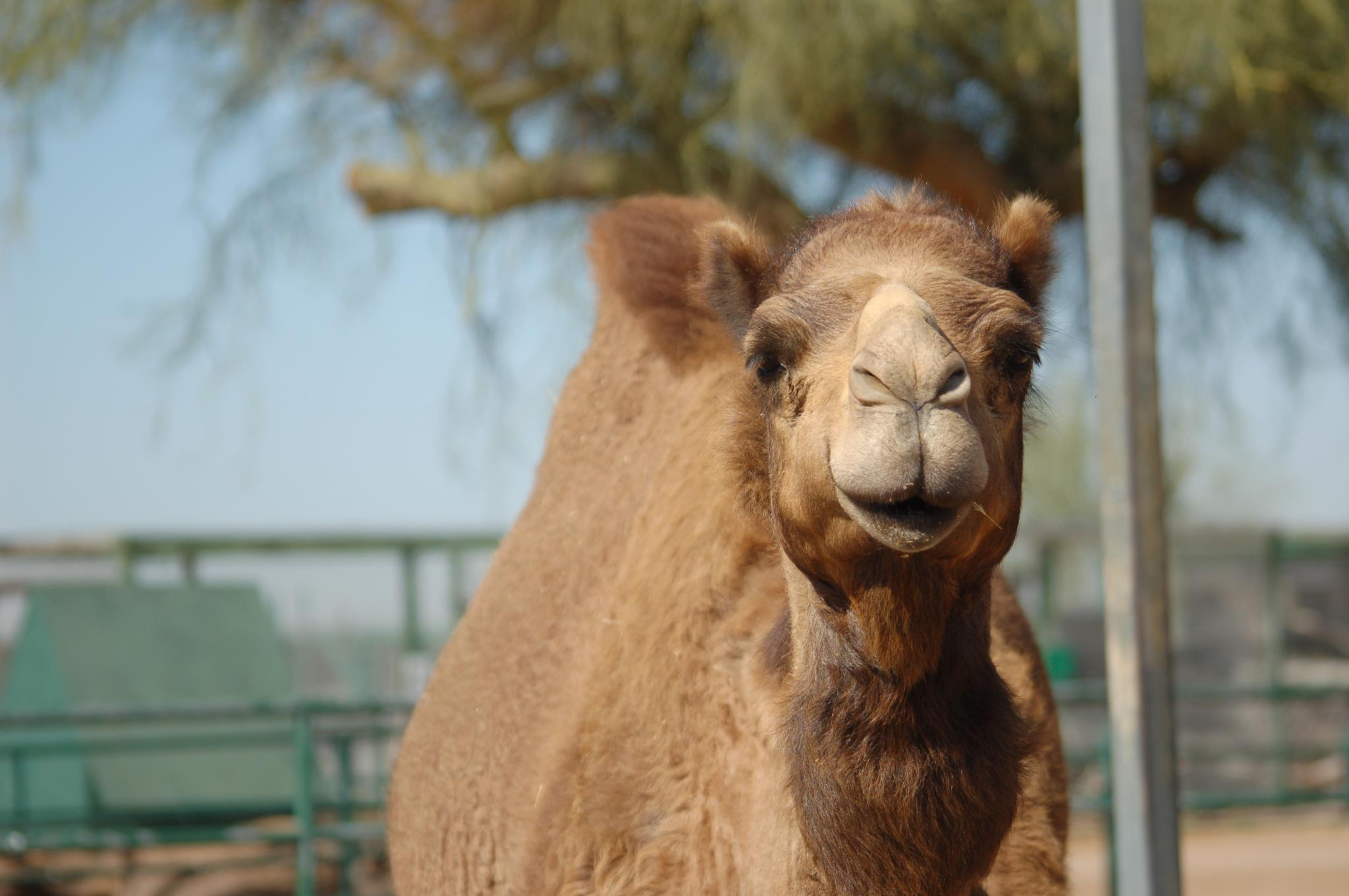 8 Little Known Places In Arizona Where Animal Lovers Should Go