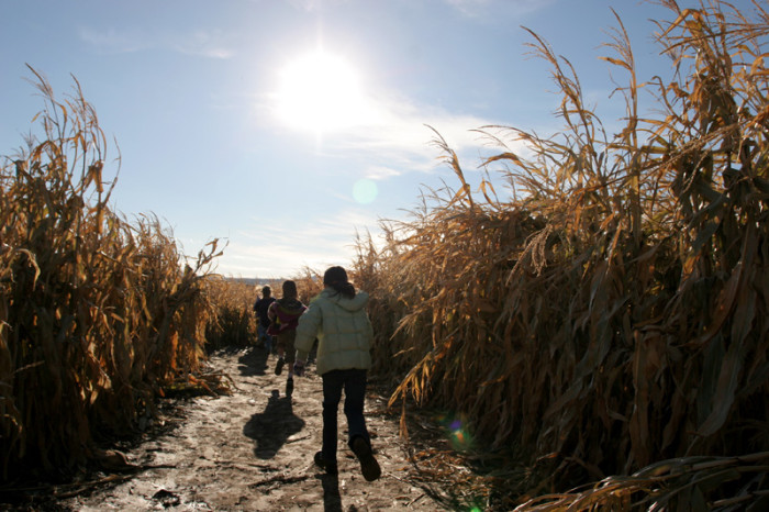 7. The new season also brings lots of fun, like corn mazes. You can find a really great maze at Pumpkinville in Mitchellville.