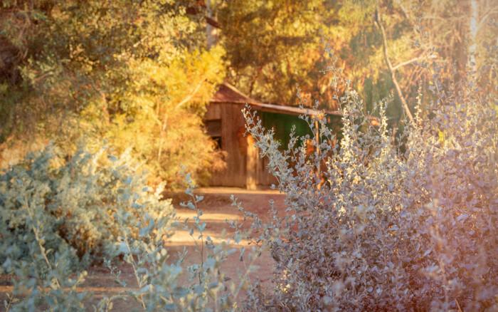 1. Boyce Thompson Arboretum State Park