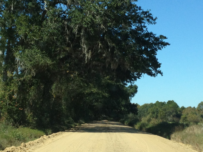 7. Canopy roads along Kinderlou-Clyattville Road in Lowndes County.