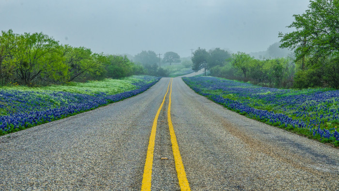 15) A rainy day in the Hill Country yields breathtaking bluebonnets in the springtime.