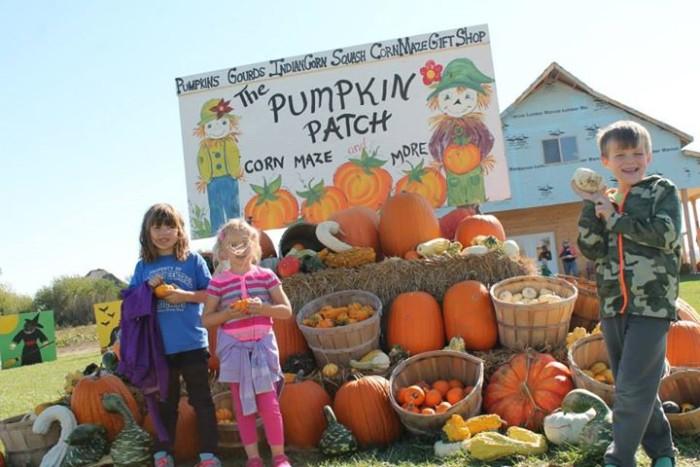 8. Hoefling's Pumpkin Patch & Corn Maze