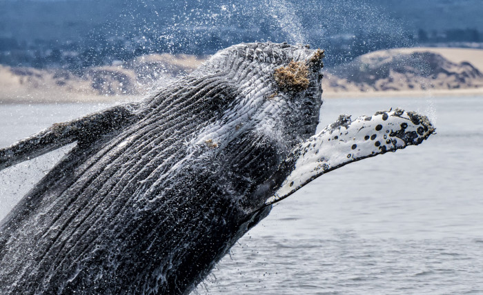 9) Watch whales frolicking off the coast.