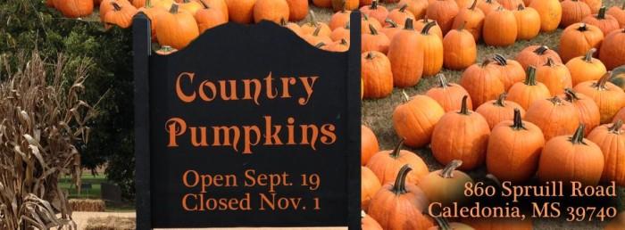 9. Country Pumpkins, Caledonia