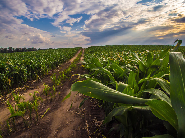 7. Another lovely shot of cornfields in Noble County. I don't know about you, but I find these cornfields to be pretty relaxing!